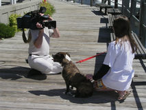 Dog on television. Dog and child being taped for TV Stock Photography