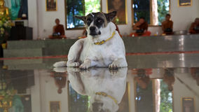 Dog in The Temple Stock Photo