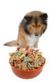 Dog temptation. Dog look food bowl with temptation close-up royalty free stock images