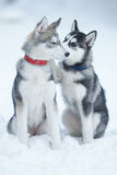 Dog tenderness Royalty Free Stock Photos