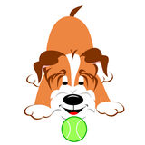 Dog With Tennis Ball. Happy puppy dog playing with tennis ball stock illustration