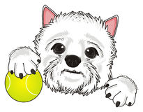 Dog and tennis ball Stock Images