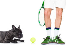 Dog tennis ball player Royalty Free Stock Images