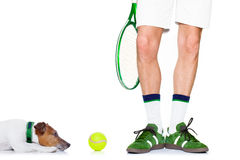 Dog tennis ball player Royalty Free Stock Photo