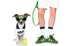 Dog tennis ball player Royalty Free Stock Photography