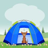 Dog in the tent Stock Image