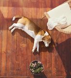 Dog on a terrace Royalty Free Stock Photos