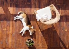 Dog on a terrace Royalty Free Stock Photography