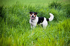 Dog in th egrass Stock Image