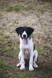 Dog ,thailand Stock Photo