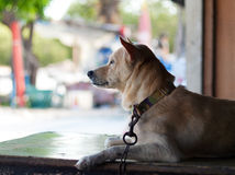 Dog in thailand. Shadow light Stock Image