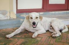 Dog Thailand Royalty Free Stock Photography