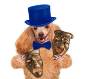 Dog with theatrical masks Royalty Free Stock Photos