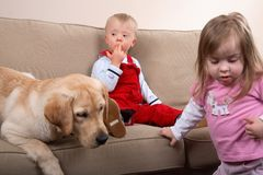 Dog therapy Royalty Free Stock Photo
