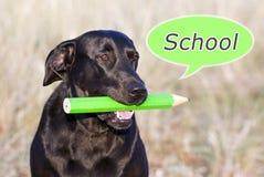 Dog thinking school Royalty Free Stock Photography