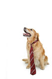 Dog with tie Royalty Free Stock Photos