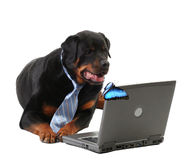 Dog in a tie looking at laptop and butterfly