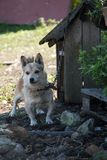 Dog tied to the kennel. Cute little farm dog. Old kannel royalty free stock photos