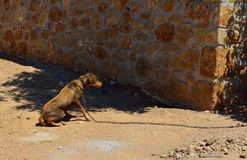 Dog tied up Stock Images
