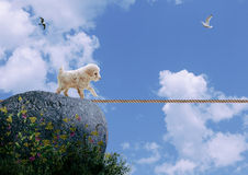 Dog on tightrope. Pet dog risking tightrope exposing themselves to danger Stock Images