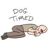 Dog tired man metaphor Stock Image