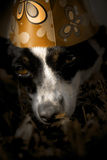 Dog Tired Party Animal Royalty Free Stock Photo