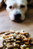 Dog tired of waiting to eat a bone Royalty Free Stock Images