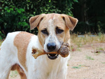 Dog to hold in the mouth ,bone outdoor Stock Image