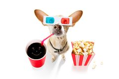 Dog to the movies royalty free stock photography