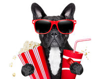 Dog to the movies. Dog going to the movies with soda and glasses Royalty Free Stock Images