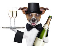 Dog toasting royalty free stock photography