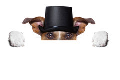 Dog toasting Royalty Free Stock Photos