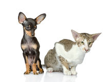 Dog together with a cat. Royalty Free Stock Photos