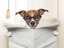 Dog toilet. Crazy silly dog sitting on toilet and reading magazine Stock Photography