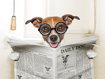 Dog toilet. Crazy silly dog sitting on toilet and reading magazine Royalty Free Stock Images