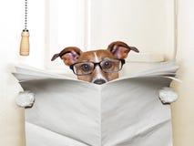 Dog toilet Stock Photography