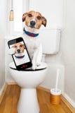 Dog on toilet seat Royalty Free Stock Photo