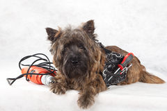 Dog with tools portrait on white. Royalty Free Stock Images