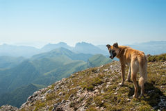 Dog on the top of Big Tkhach mountain, view to Acheshbok mountain, Russia Royalty Free Stock Image