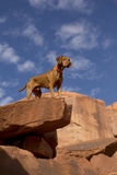 Dog on the top of the cliff Royalty Free Stock Photography