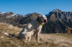 Dog on the top of the mountain Royalty Free Stock Photos