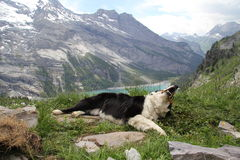 The dog on the top of mountain Stock Photo
