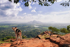 Dog on the top of Sigiriya Rock. Top of Sigiriya Rock. Sigiriya Is UNESCO Listed World Heritage Site In Sri Lanka Stock Photo