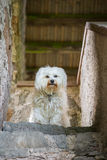 Dog top Royalty Free Stock Photography