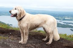 Dog on a Torc mountain Stock Photos