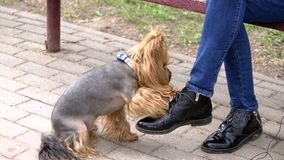 Dog touches human`s legs with his paw stock footage