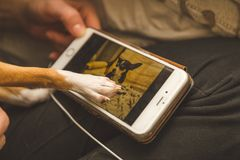 Dog Touching Cell Phone. Small puppy hand touches a phone screen with another dog on it royalty free stock photos