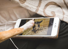 Dog touching image of other dog on cell phone Stock Photography
