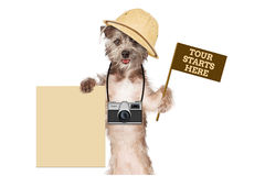 Dog Tour Guide Blank Sign. A cute dog safari guide with a camera, tour flag and blank sign stock images
