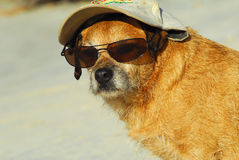 Dog tourist in Caribbean Stock Image
